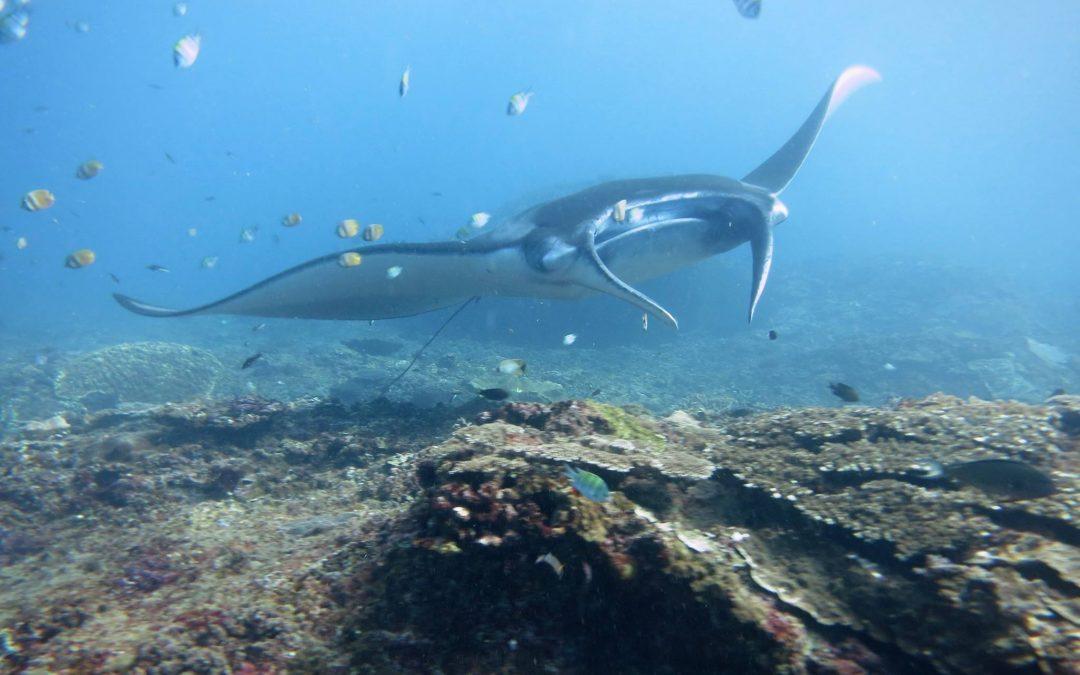 Marine Megafauna Foundation Southeast Asia