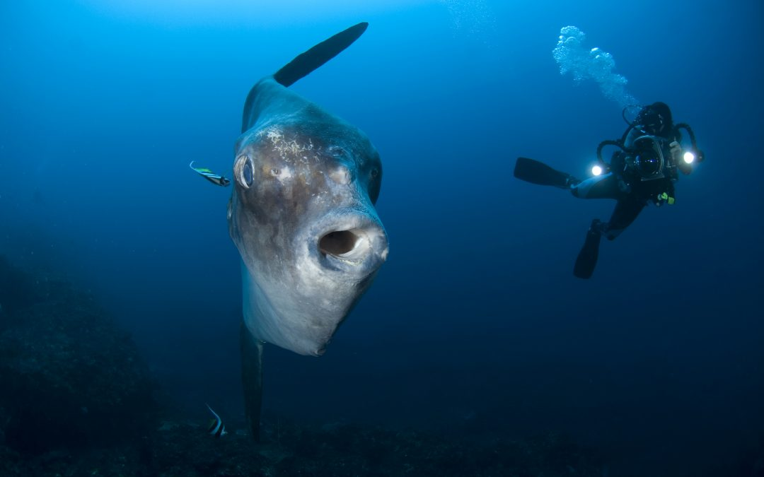 Really Big Fish Diving at perfect dive destination