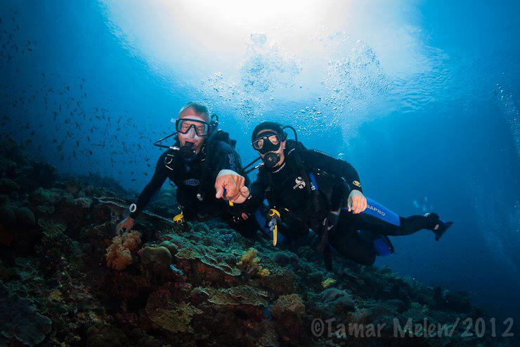 Mola Diving with the Big Fish Experts, Nusa Lembongan, Bali